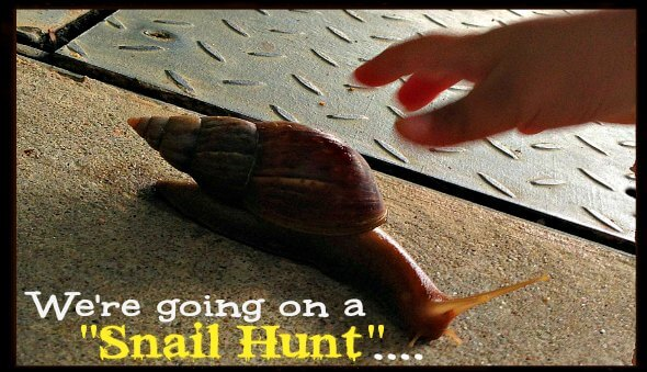 """""""We're Going On A Snail Hunt"""" – A Post Rainy Day Activity"""