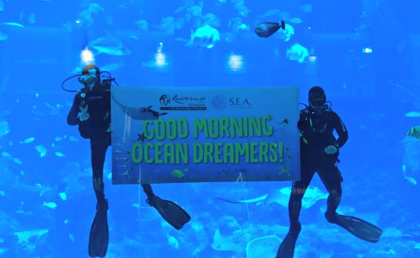 Review Ocean Dreams Sleepover Resorts World SEA Aquarium Singapore Kids Activities Birthday Party Venue Slumber Party