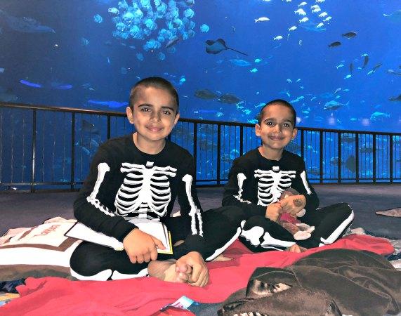 27 Review Ocean Dreams Sleepover Resorts World SEA Aquarium Singapore Kids Birthday Venue Sentosa