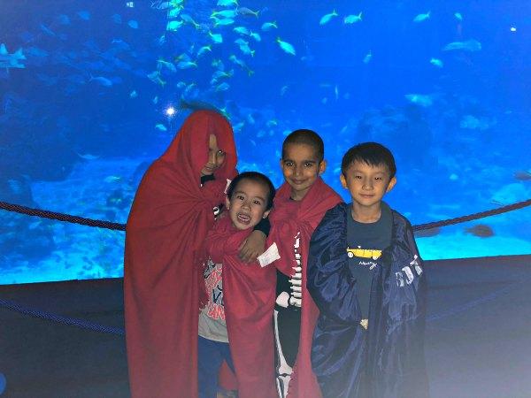 Ocean Dreams Sleepover Resorts World SEA Aquarium Singapore Kids Activities Places to visit