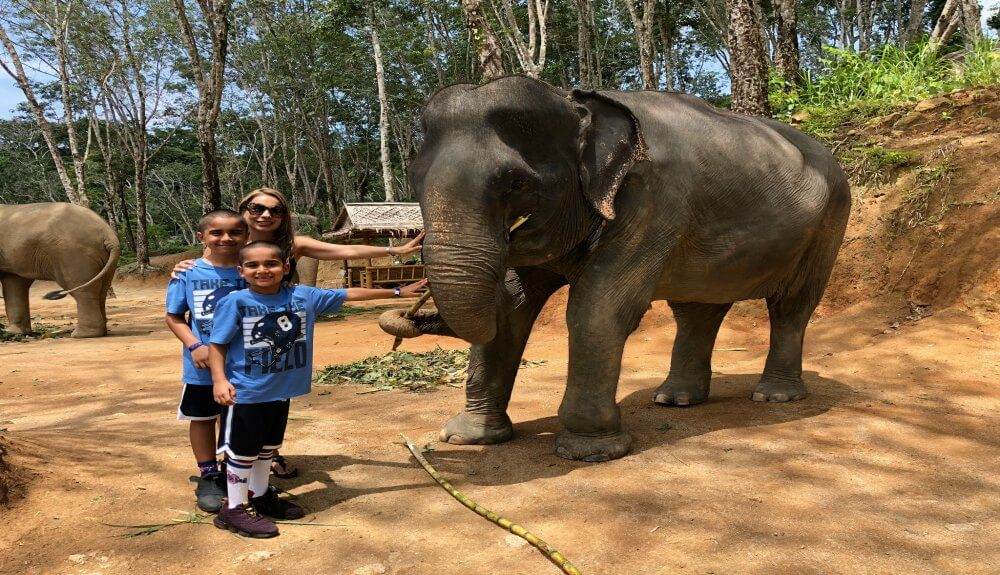 Elephant Jungle Sanctuary Reviews - Things to do in Phuket Chiang Mai with Kids
