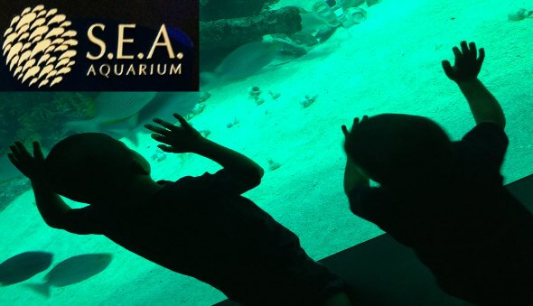 The S.E.A. Aquarium at Resorts World Review