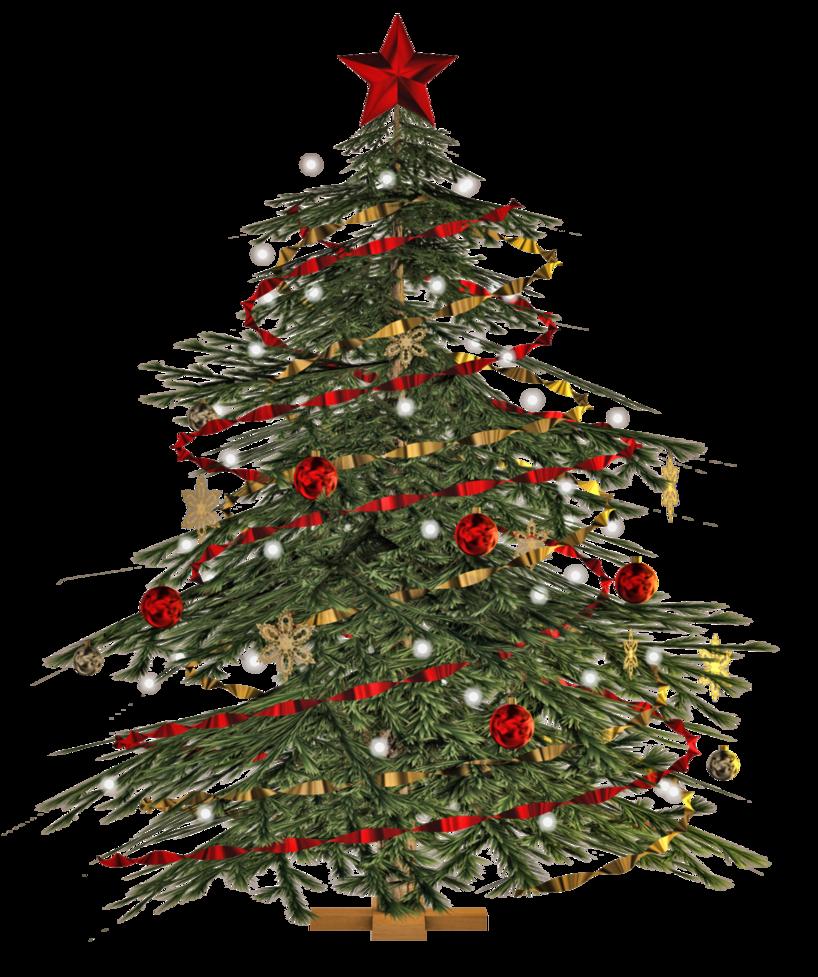 buy-real-live-christmas-tree-singapore