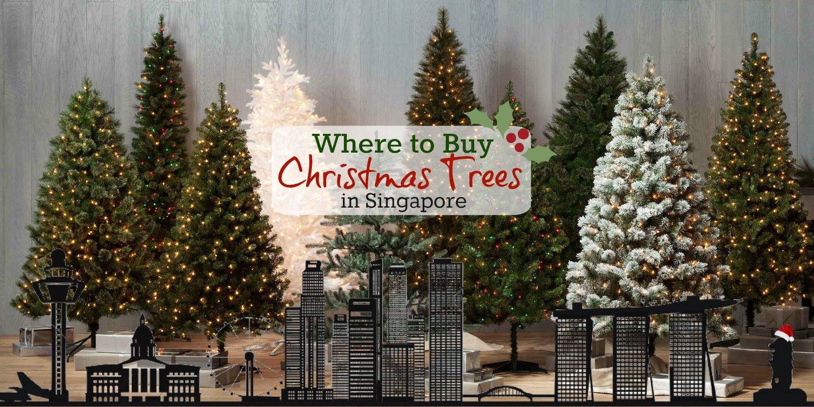 where-to-buy-real-christmas-xmas-trees-singapore-sg