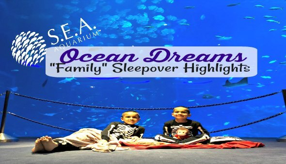 "Our ""Ocean Dreams"" Family Sleepover at the S.E.A. Aquarium"