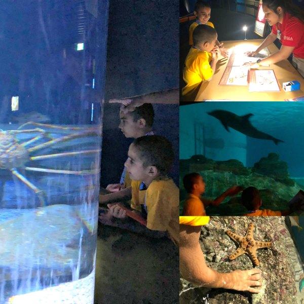 Review Ocean Dreams Sleepover Resorts World SEA Aquarium Singapore Kids Unique Birthday Venue
