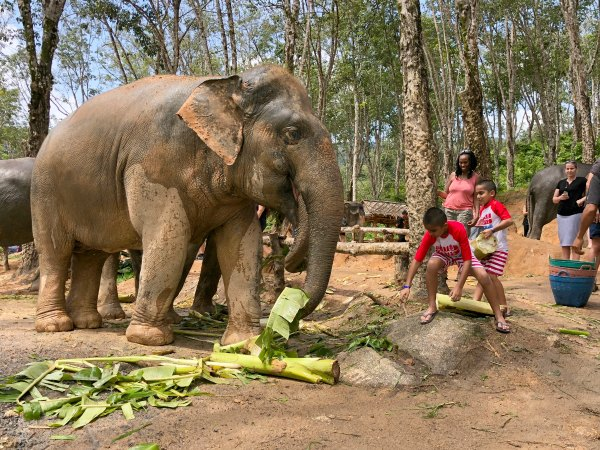 Things to do in Phuket Chiang Mai with Kids Elephant Jungle Sanctuary Review Promotions Discounts